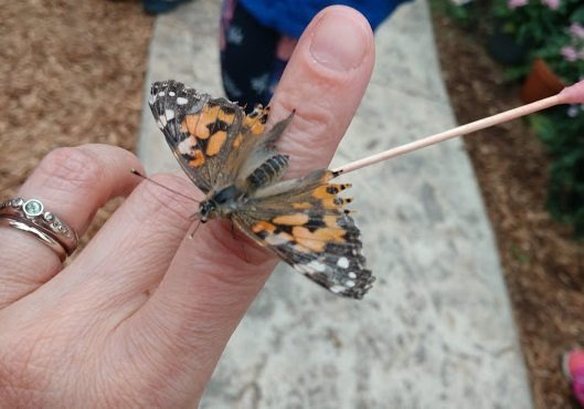 Go on a Butterfly Adventure at Roper Mountain Science Center!
